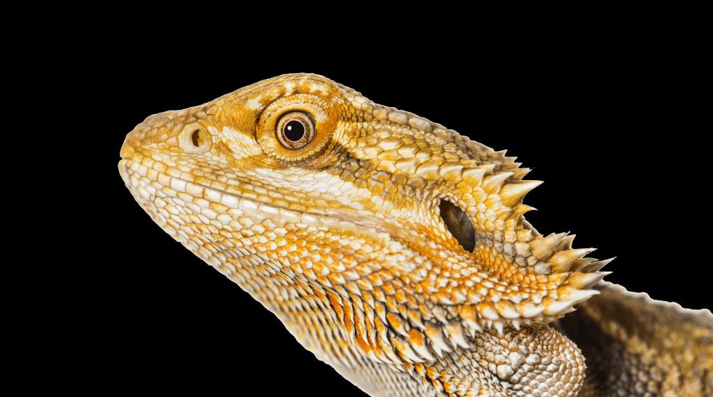 Radicool Reptiles
